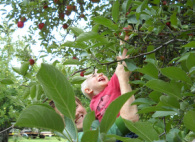 Children love picking fruit from local farms around canton